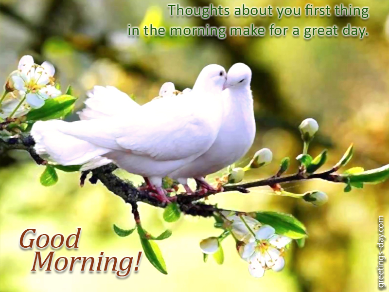 Good Morning Love Greetings Greeting cards ...