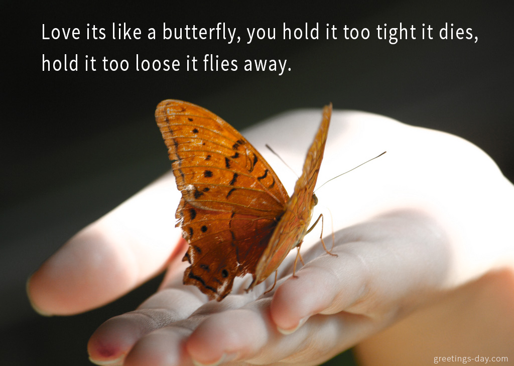 Love its like a butterfly