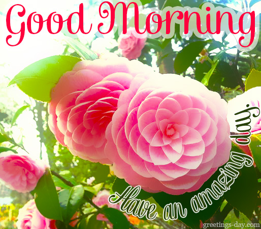 Good Morning French Greetings : Good morning greetings pics