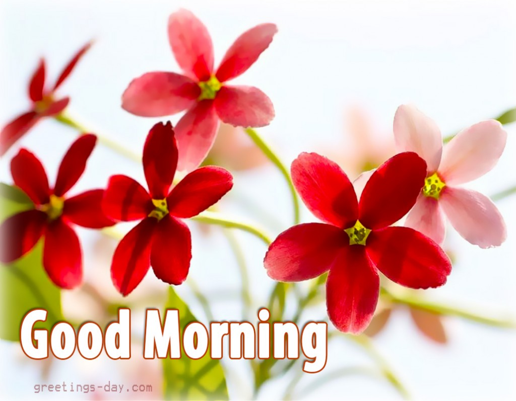 Good Morning Japanese Greeting : Good morning best pictures animated pics and wishes