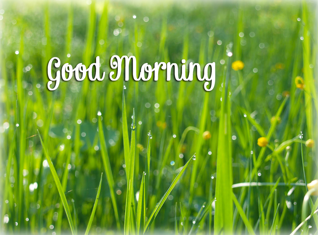 good morning online cards photos quotes