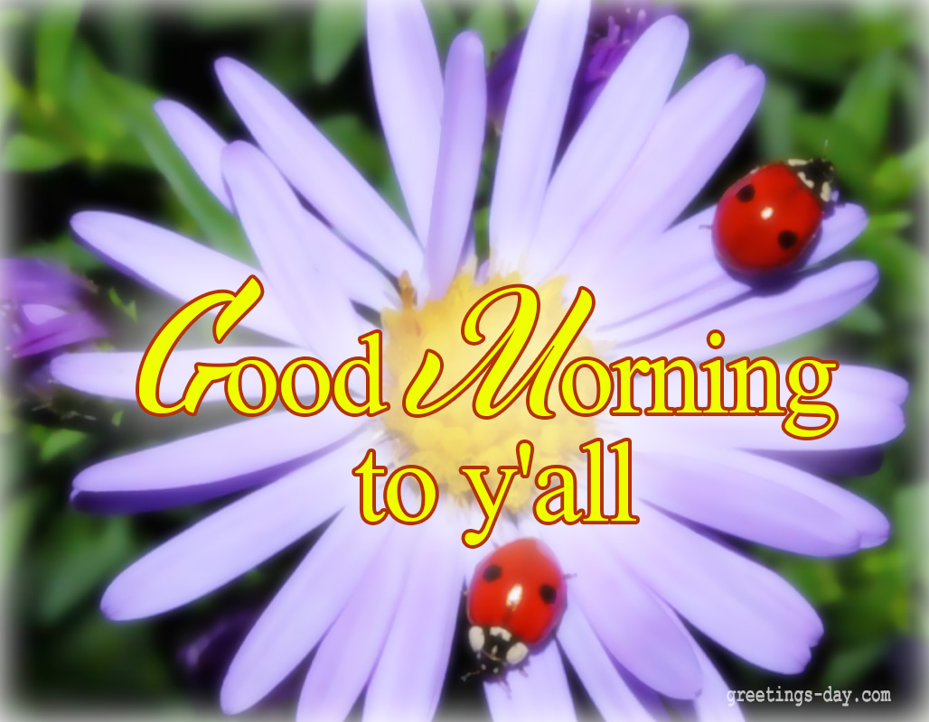 Good Morning Daily Ecards Photos And Greetings