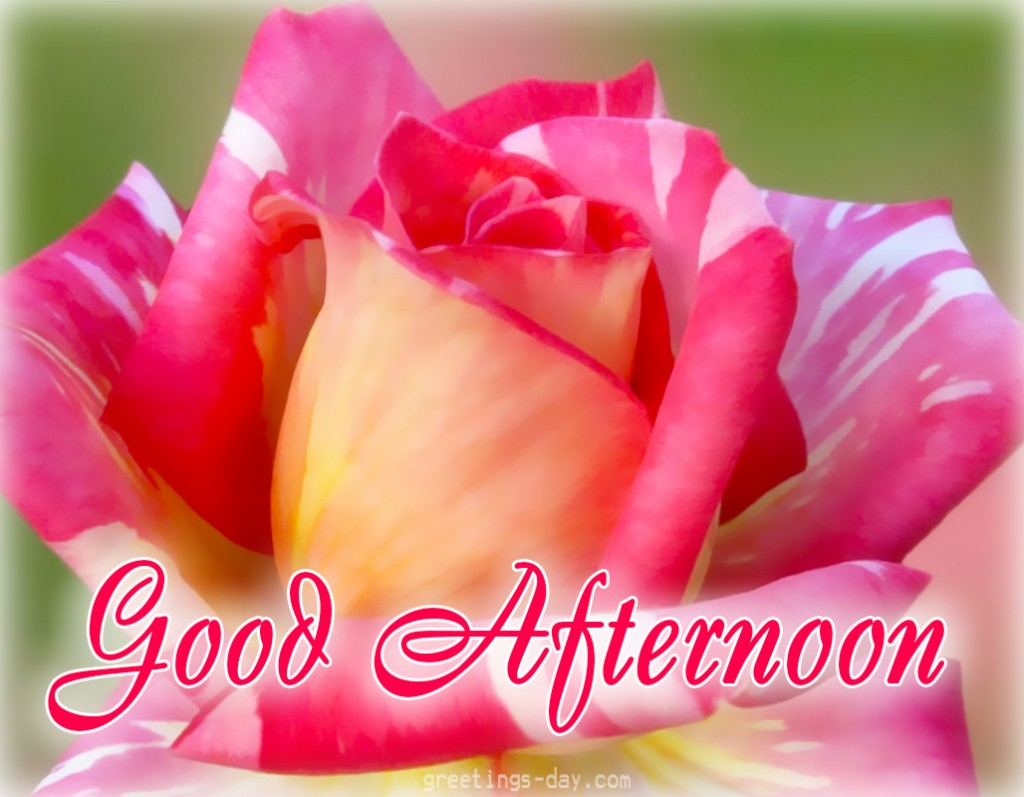 good morning comments wishes messages good   valentineblog