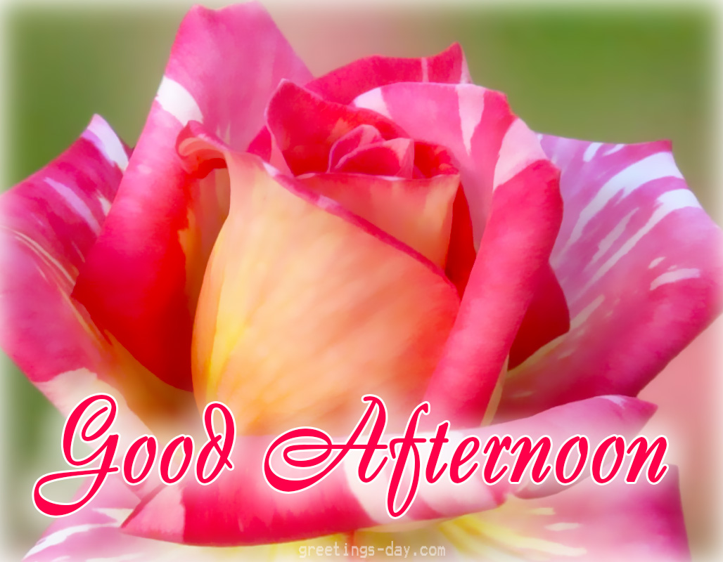 Good Afternoon Love Quotes Beauteous Greeting Cards For Every Day Good Afternoon  Best Pictures Gifs