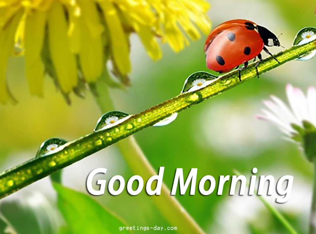 Good Morning – Best Cards, Photos & Quotes