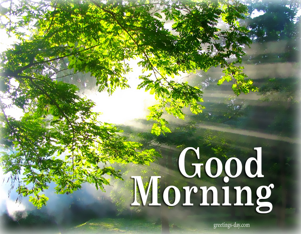 Good Morning Free Ecards Photos And Greetings