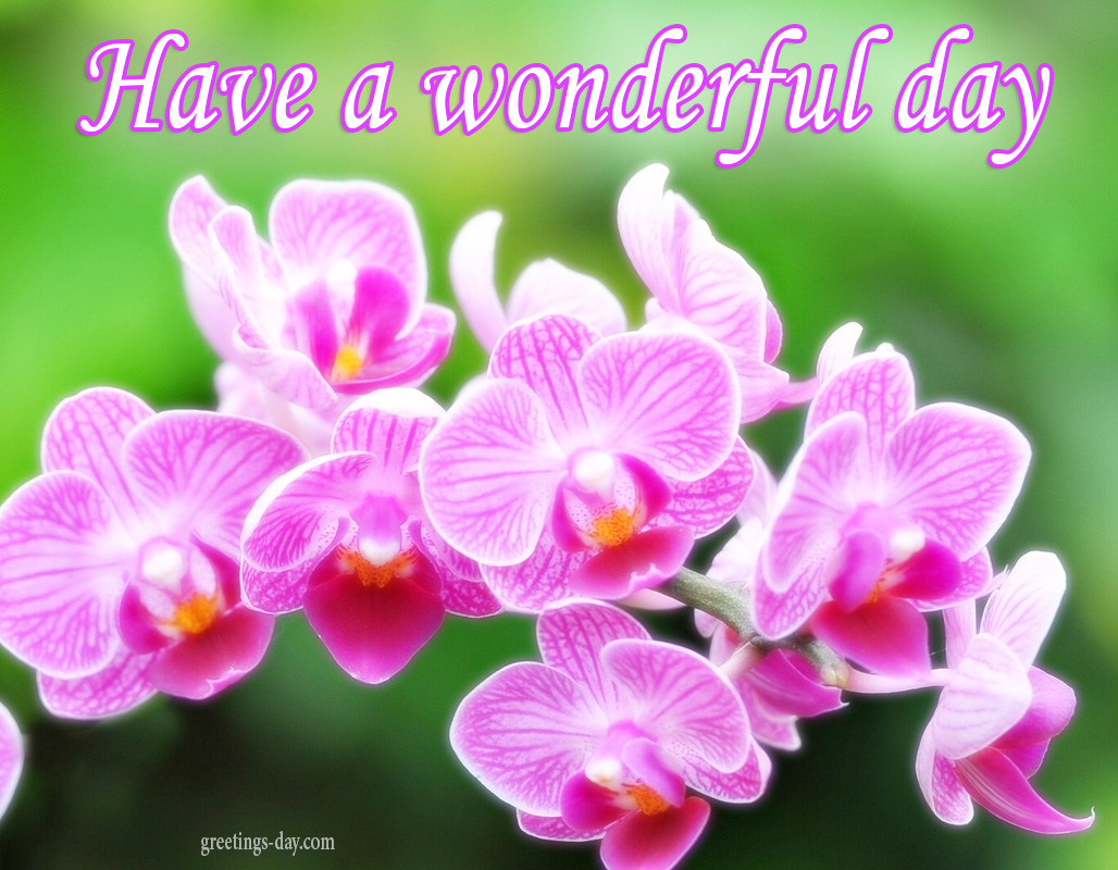 Have a Wonderful Day – Daily Pics, Greetings
