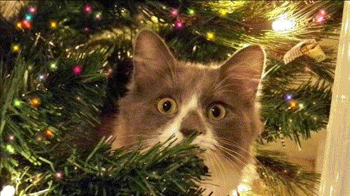 christmas cats gif