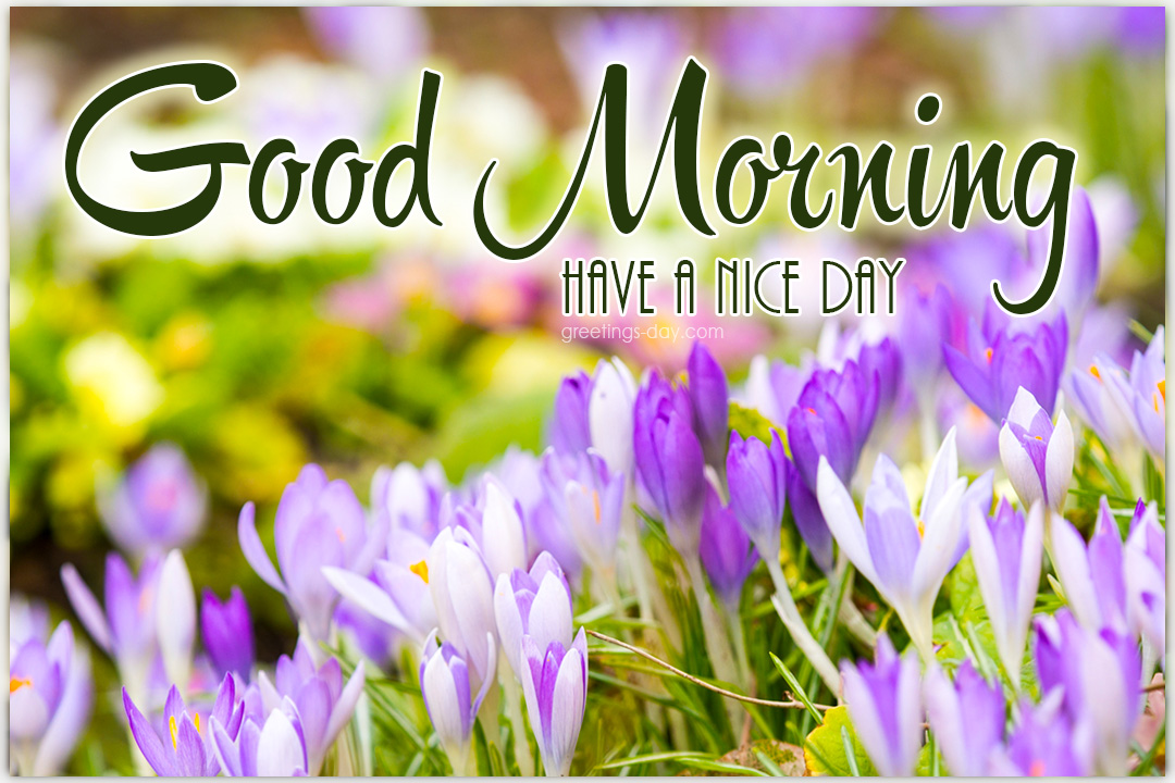 Good Morning Spring Pictures, eCards & Greetings, Wishes.