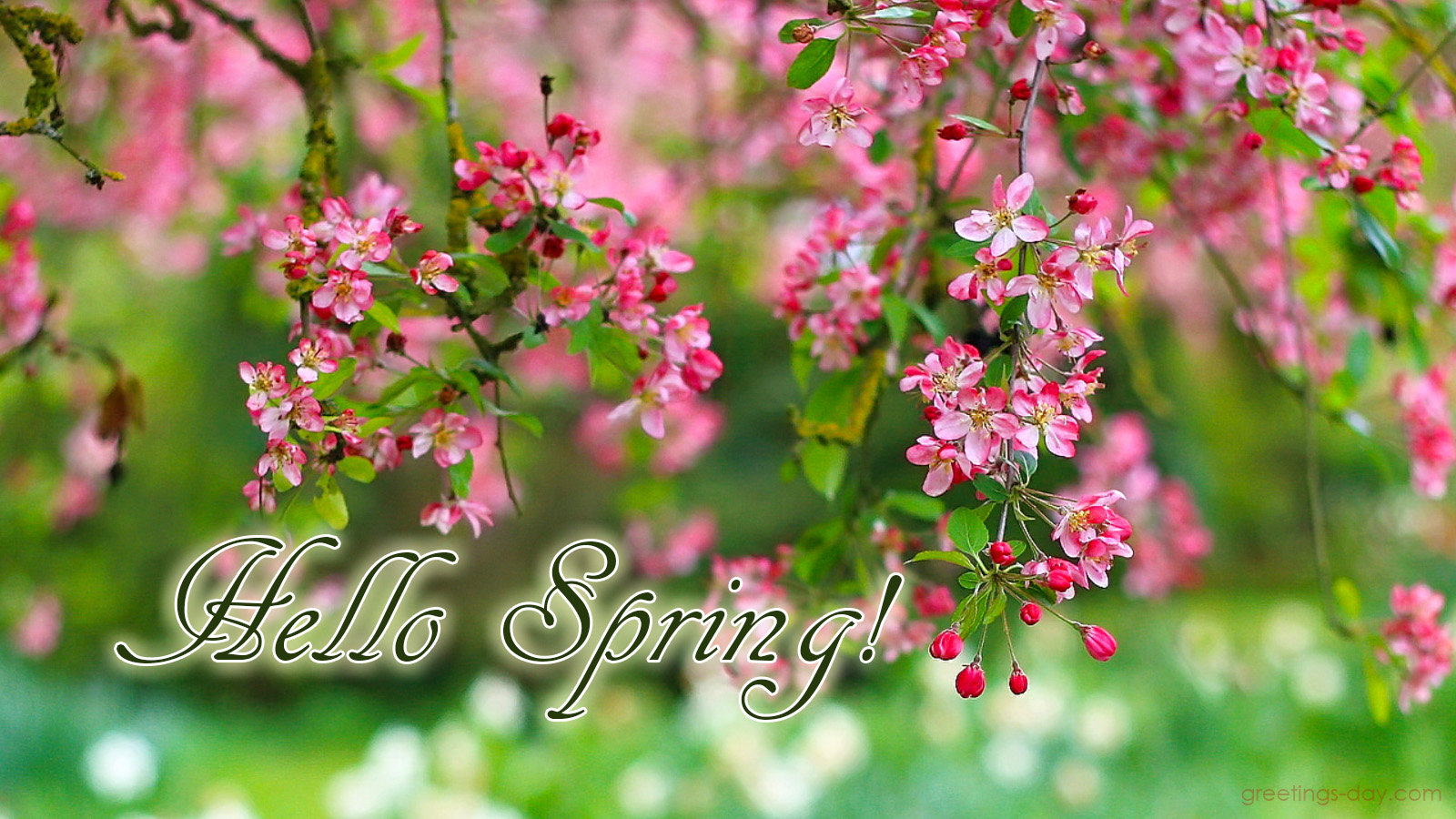 greeting cards for every day welcome spring 10 amazing