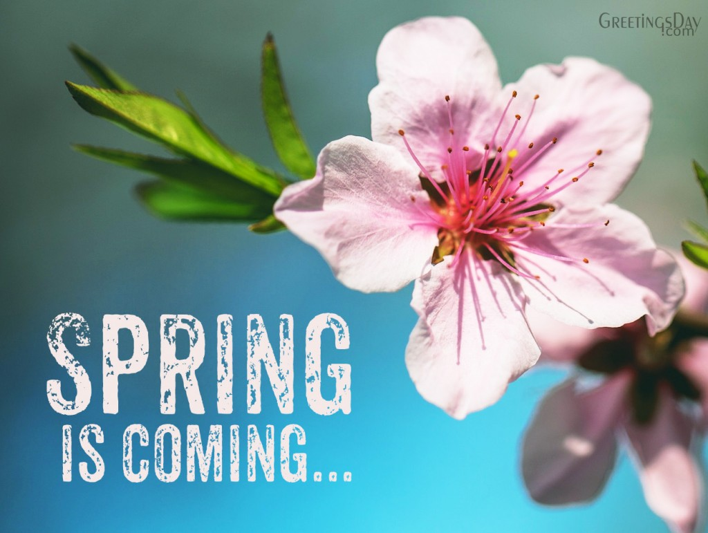 spring comeing