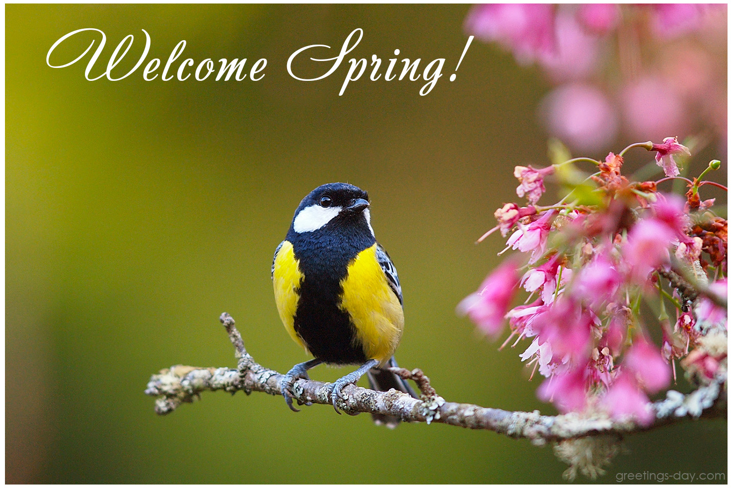 ImageSpace - Welcome Spring Quotes | gmispace com