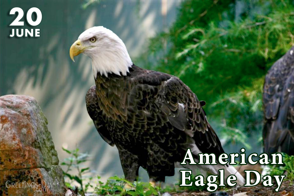 American Eagle Day